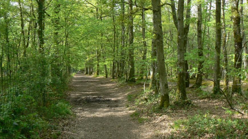 Forêts : un bilan inquiétant pour le Canton de Vaud