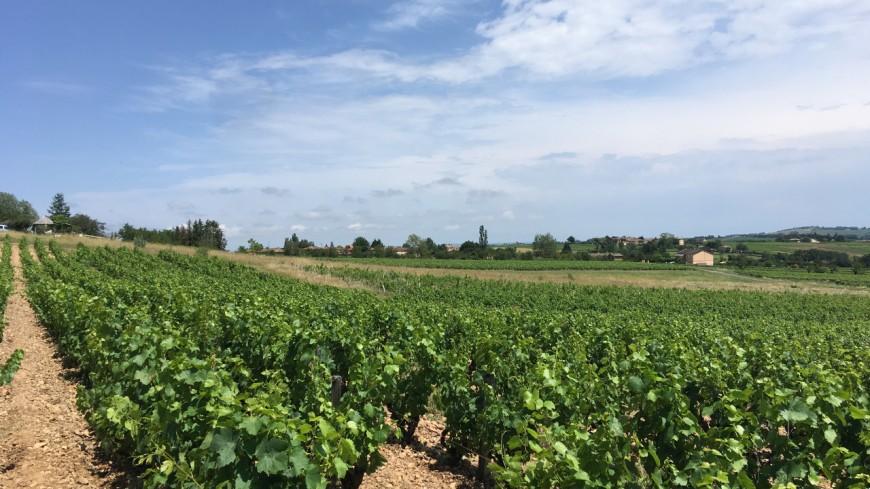 Vaud : un bon millésime pour 2019