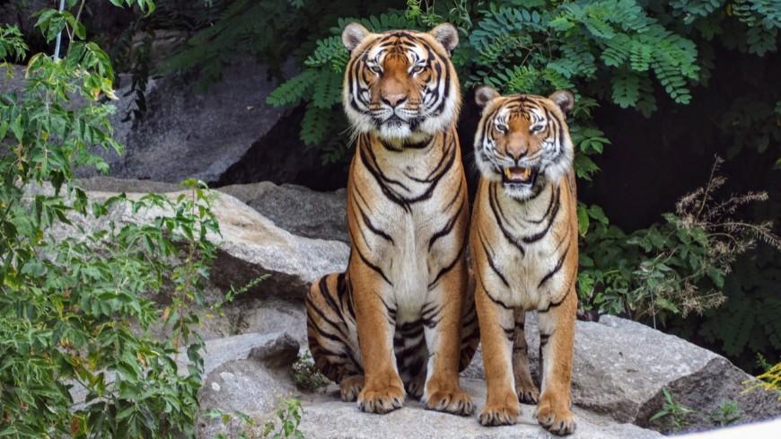 Les animaux sauvages interdits dans les cirques en France !