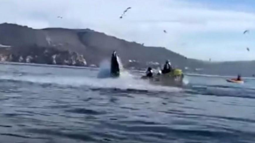 Gobées, puis recrachées par une baleine ! (vidéo)