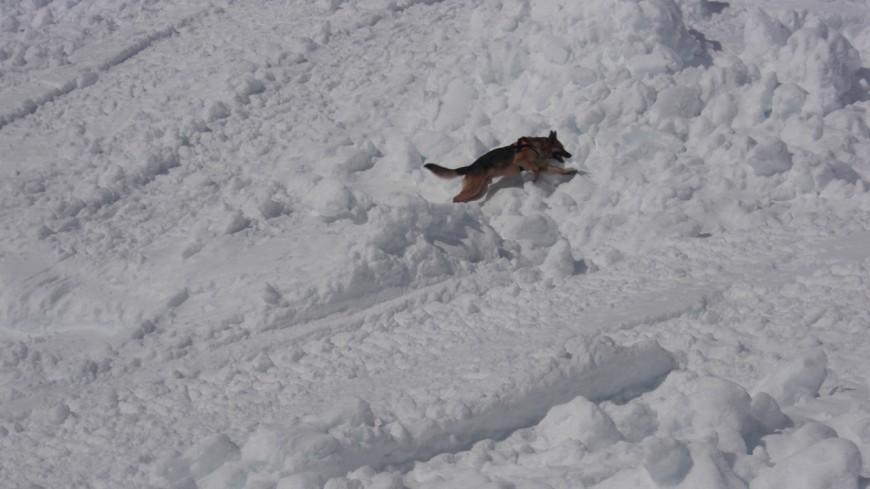 Les maitres-chiens se forment en Savoie