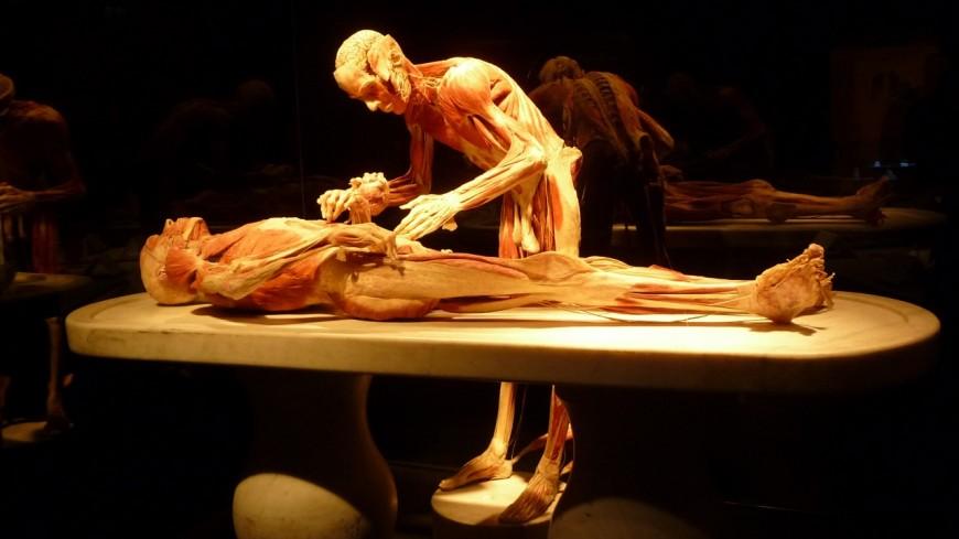 Pas d'expo de cadavres à Lausanne