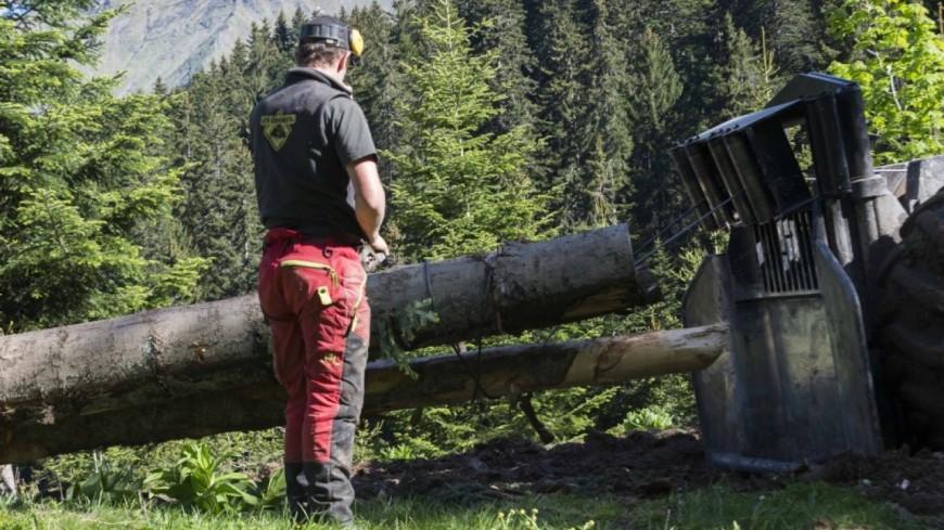 L'Europe subventionne les projets forestiers du Chablais
