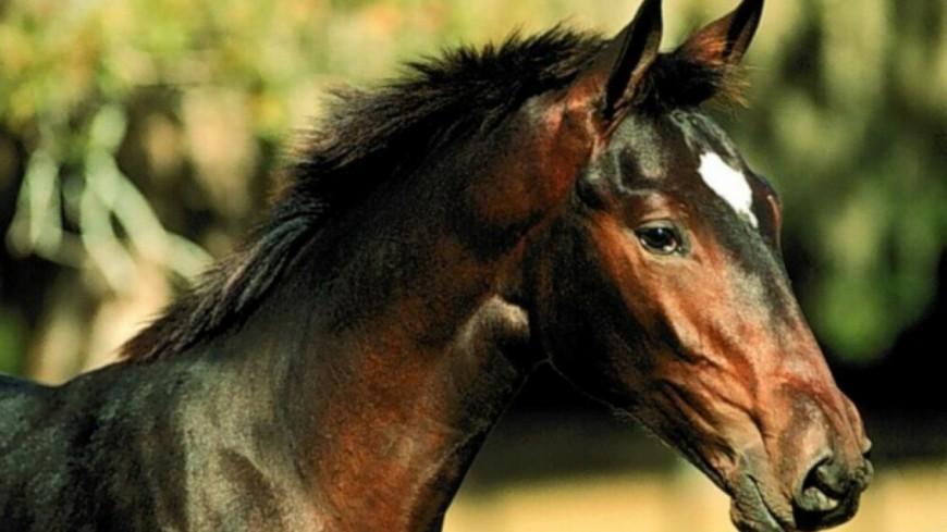 Les animaux d'un centre équestres saisis