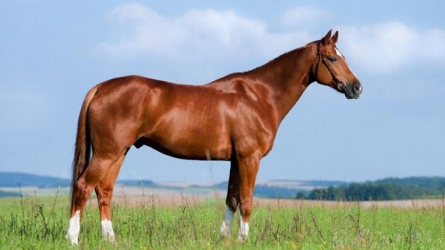 Le cheval à l'honneur à La Roche ce week-end
