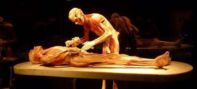 Le corps en exposition à Genève